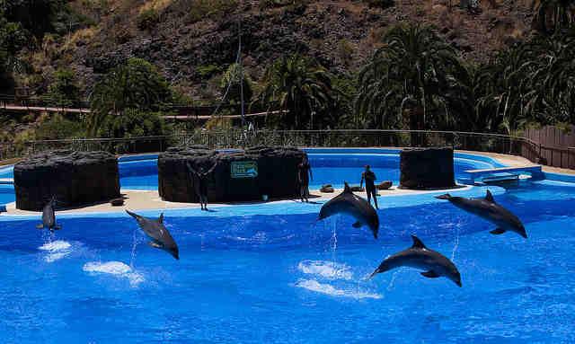 Dolphin show at Palmitos Park