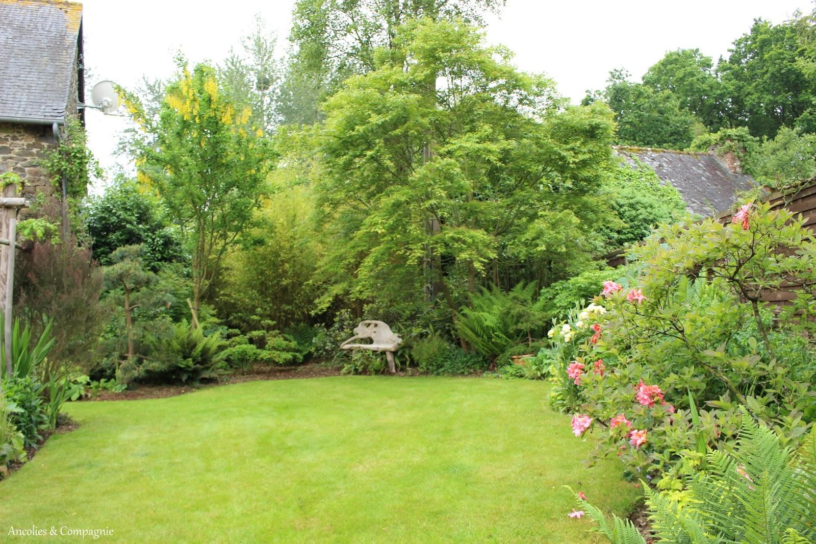 Ancolies compagnie rendez vous au jardin chez daniel for Rendez vous au jardin