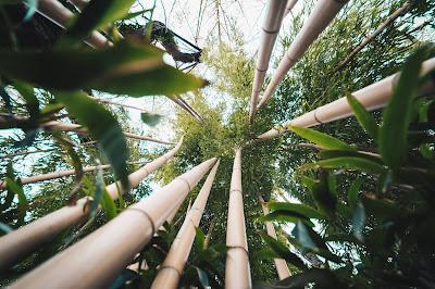Badmobel Aus Bambusholz Tipps Und Empfehlungen Fur Den Kauf