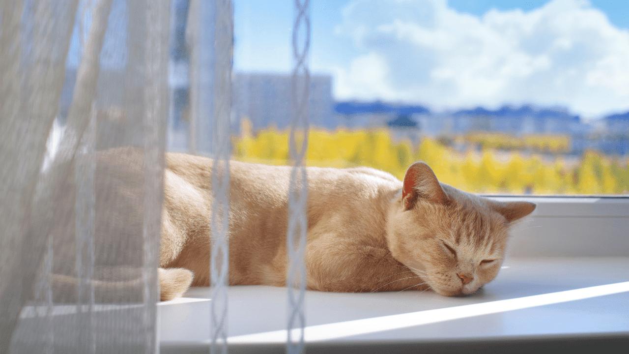 gato naranja durmiendo frente a la ventana