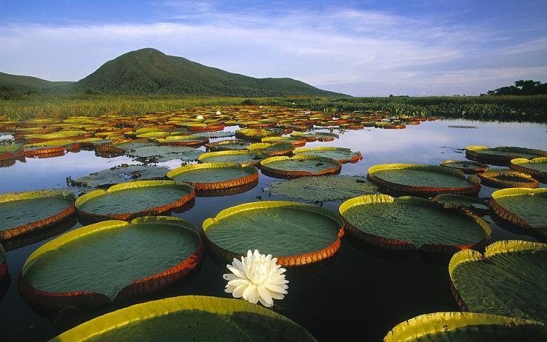 Mengenal Pantanal, Rawa-rawa Terbesar di Dunia