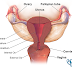 How to figure out cervical cancer in early stages?