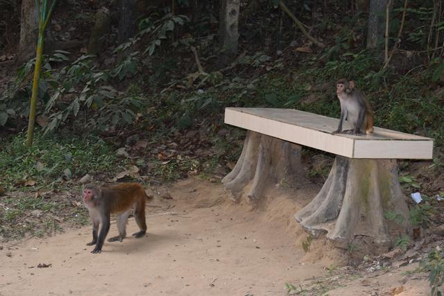 Some monkeys at Lawachara national park | 6 pictures