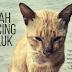 Kisah Kucing Security