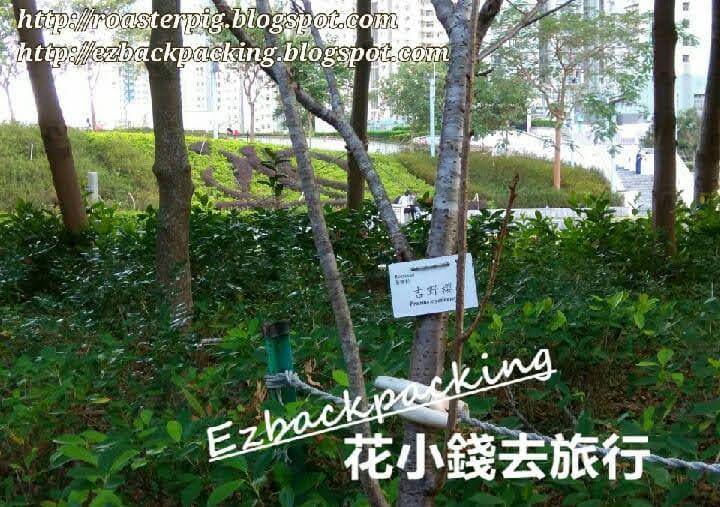 2021年香港櫻花