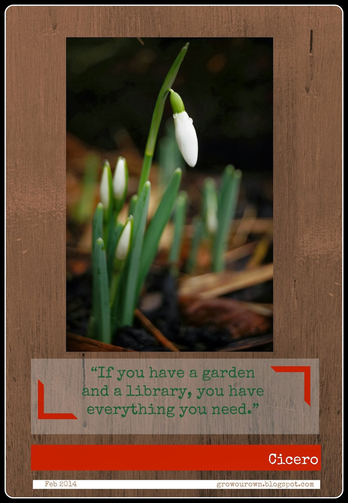 February 2014 - Snowdrop Photo/Quote - Grow Our Own Allotment Blog