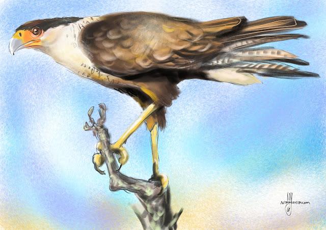 Crested caracara bird painting bu Artmagenta
