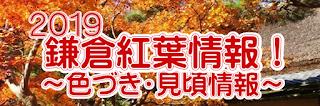 2019紅葉・黄葉情報