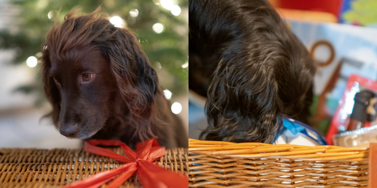 How To Have The Best Christmas With Your Dog