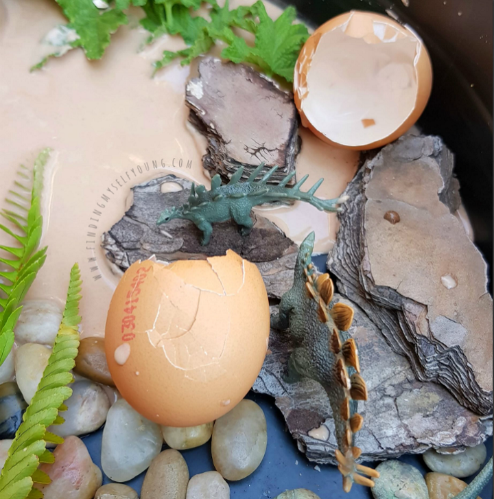 Baby stegosaurus dinosaurs hatching from eggs in small world play.