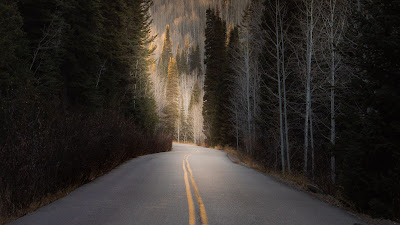 Wallpaper Hill, Trees, Asphalt, Road, Forest