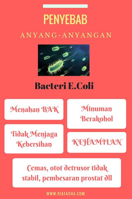 bakteri ecoli sebagai penyebab anyang anyangan