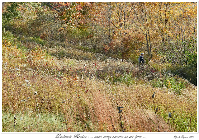 Wachusett Meadow: ... where seeing becomes an art form...