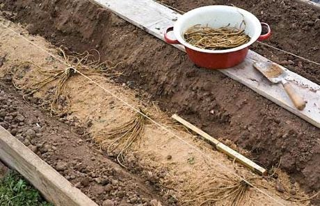 how to make a raised asparagus bed