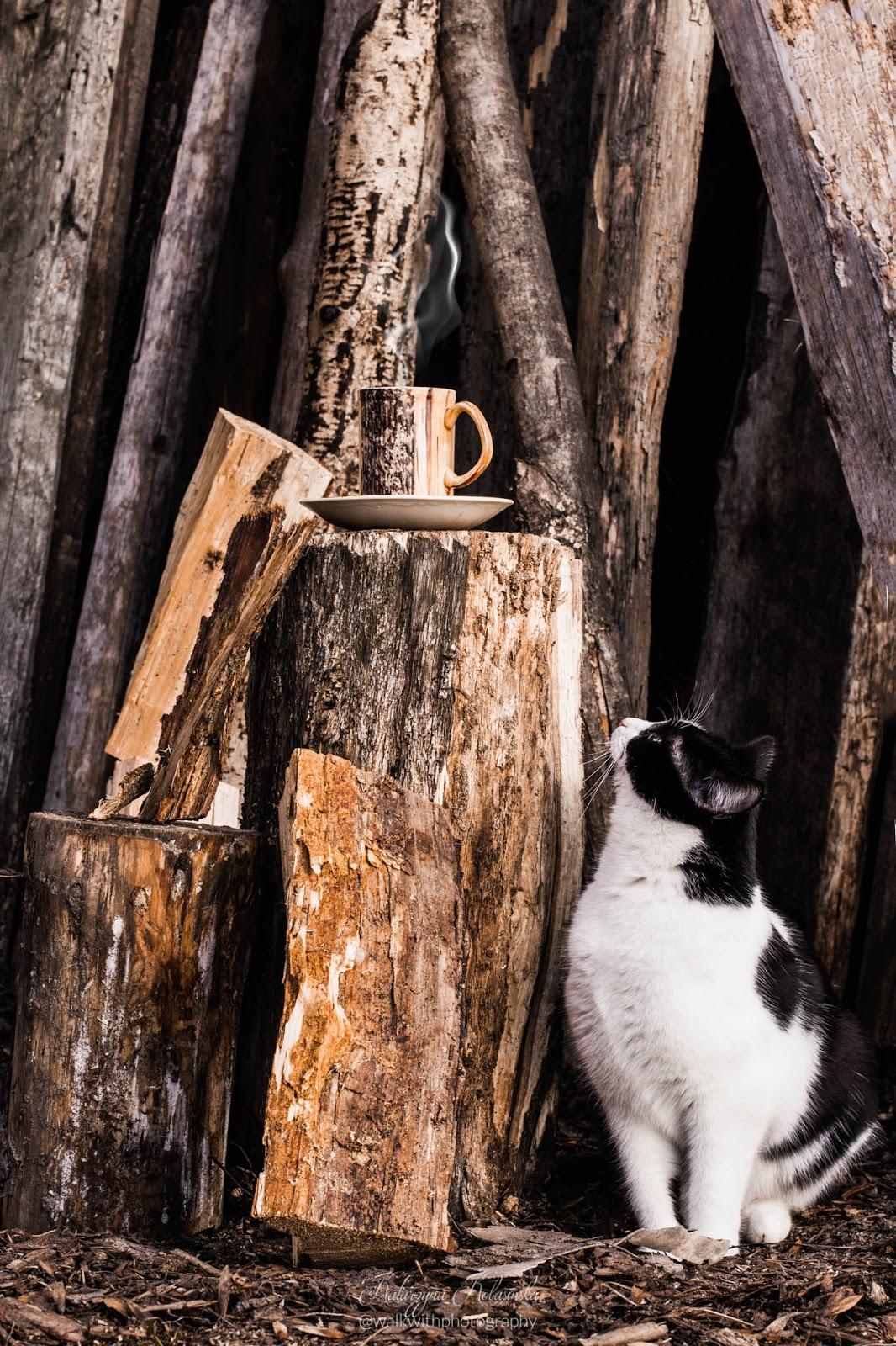 kot patrzy w górę, kot i drewno
