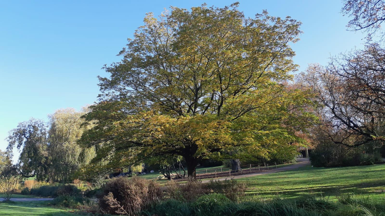 Le Parc Barbieux dit le Beau Jardin: Le Bol dAir