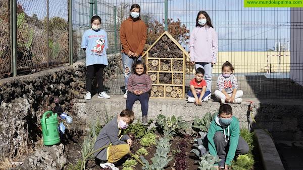 El Paso instala 'Hoteles de Insectos' en los centros educativos