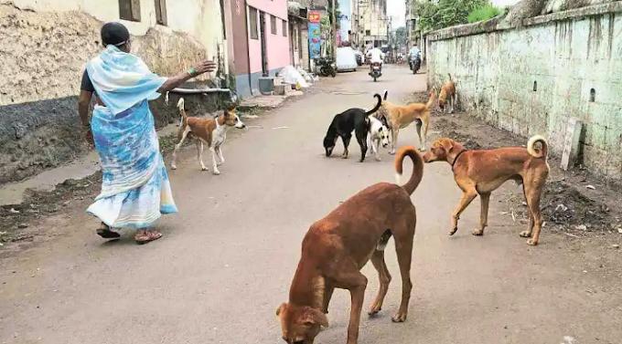 मिरजेत मोकाट कुत्र्यांचा सुळसुळाट.