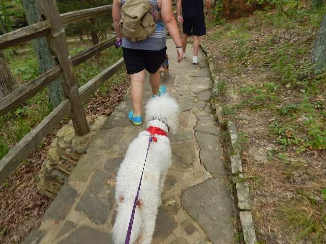 poodle walking the trail at #GardenoftheGods