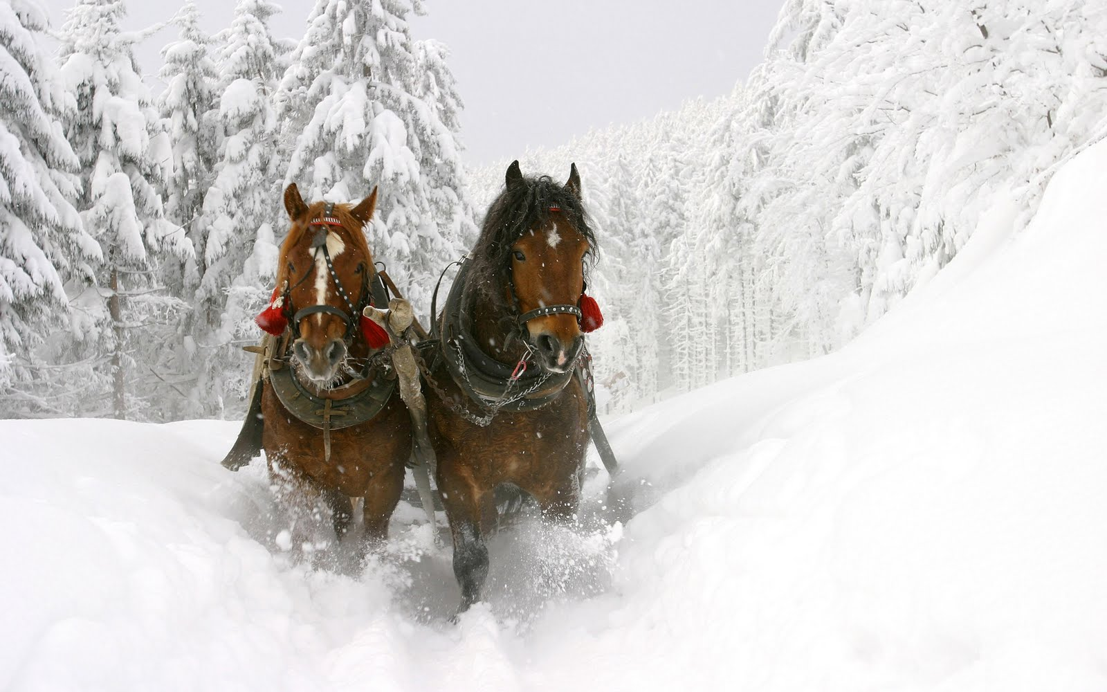 Forest Animal Wallpaper Animal Wallpapers Horses In Snow