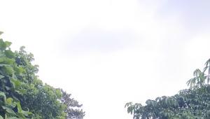 Lsm Dampal Jurig Fkpplh ,Agm Mekarsari , Bpdashl Citarum Ciliwung Lakukan Baksos Penanaman & Bagikan Pohon Gratis Dihari Lingkungan Hidup Sedunia