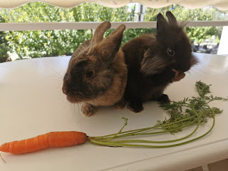 two rabbitts and a carrot