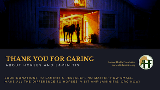 laminitis research through Animal Health Foundation