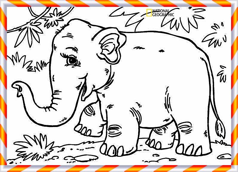 elefant ausmalbilder tiere - sims 4 cc mod skin stil shoes