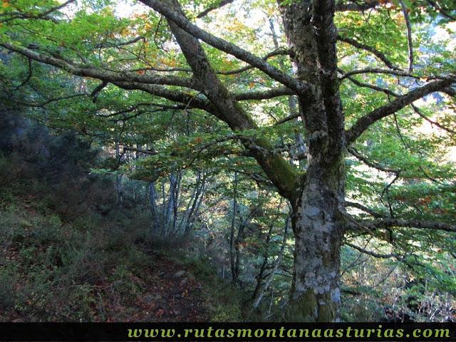 Ruta de los Arrudos y Corteguerón: Sendero por el bosque