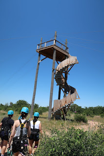 The largest platform at Zip Lost Pines and the start of the second zip