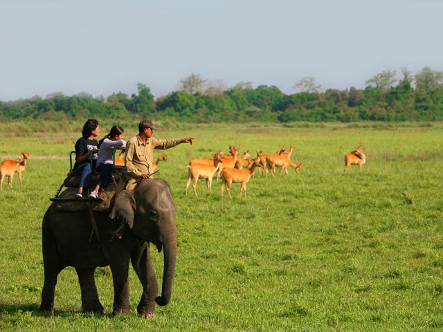 Kaziranga - Destinations in India for Women Solo Travelers