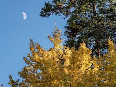 Autumn leaves: Engaku-ji