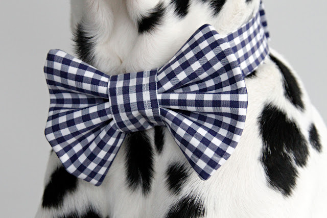 Blue and white check dog bow tie with matching collar band