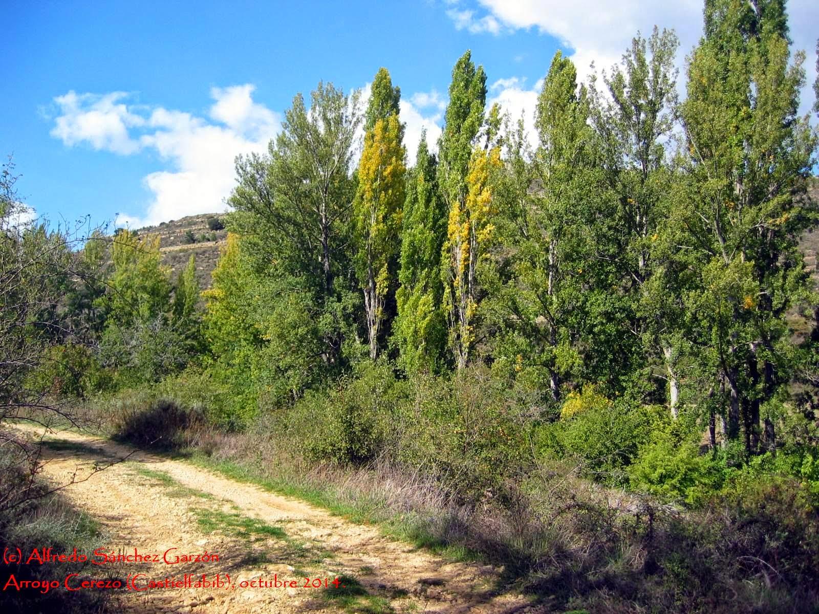 castielfabib-arroyo-cerezo-camino