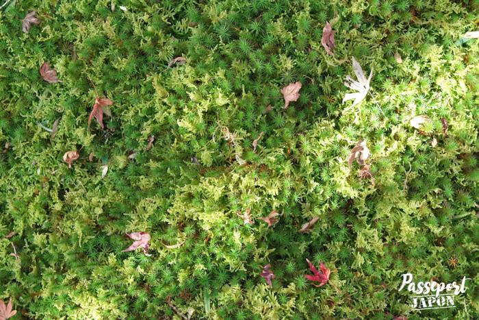 Mousses dans le jardin de Kunenan, Kanzaki, Saga