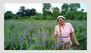 Taman Bunga Lavender di tts