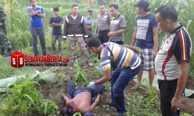 Karena Ternak Sapi Makan Tanamannya , Pemilik Sapi Ditebas Hingga Tewas Oleh Seorang Petani.