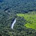 Kaupoissa saa edelleen myydä metsäkatotuotteita – EU maailman suurimpia trooppisen metsäkadon aiheuttajia
