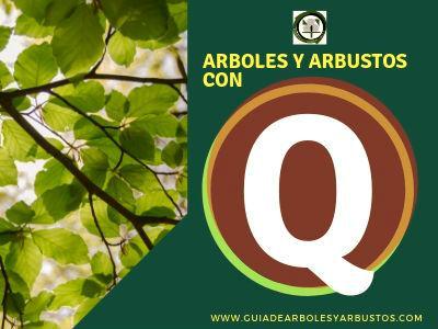 Lista de arboles y arbustos que empiezan por la letra Q
