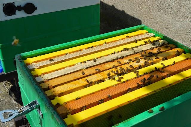 Όλοι οι τρόποι τροφοδότησης & ταίσματος των μελισσιών