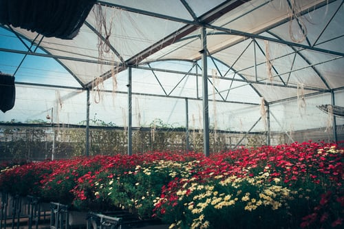 greenhouses photoshoot