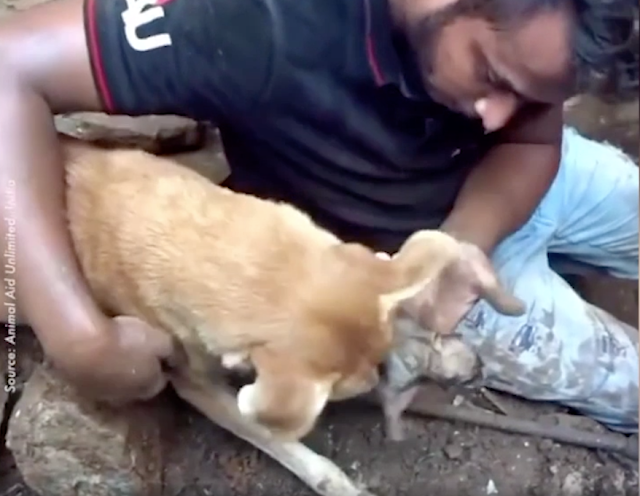 Video: Chó mẹ khóc cầu xin sự giúp đỡ khi đàn con nhỏ đang bị lấp dưới đất đá