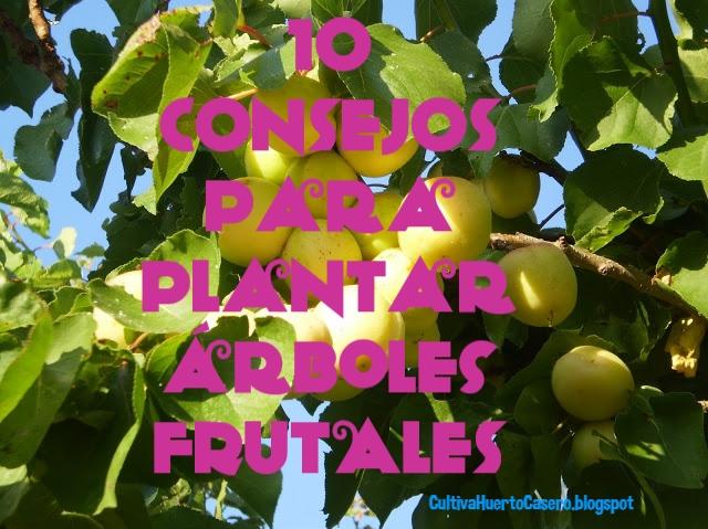Cultivar el huerto casero 10 consejos sobre rboles for Tipos de viveros frutales