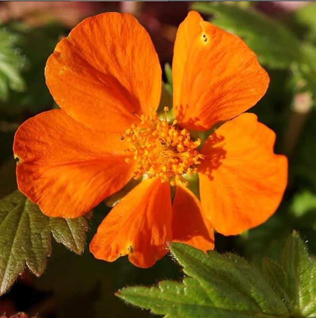 A Stubborn Optimist - Ecotherapy blog  ~ C.Gault 2019