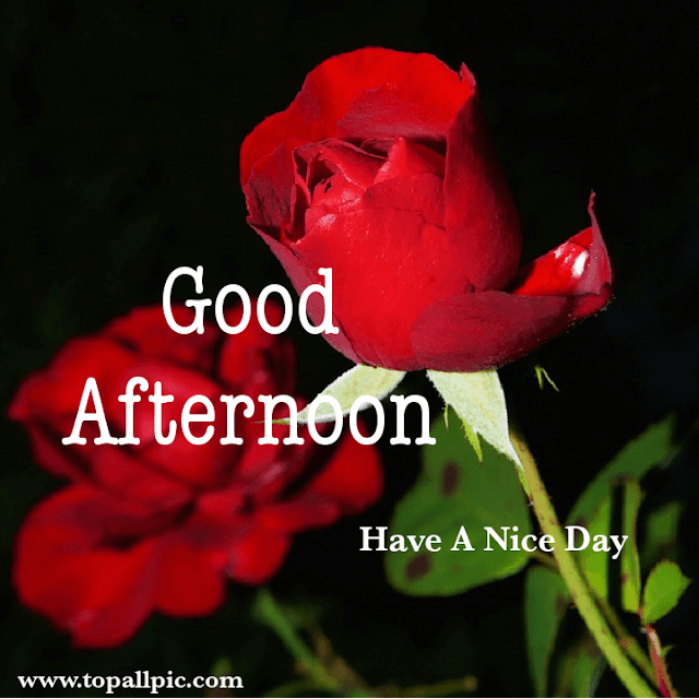 100 Best Good Afternoon Messages,Quotes,Wishes With Images 2020