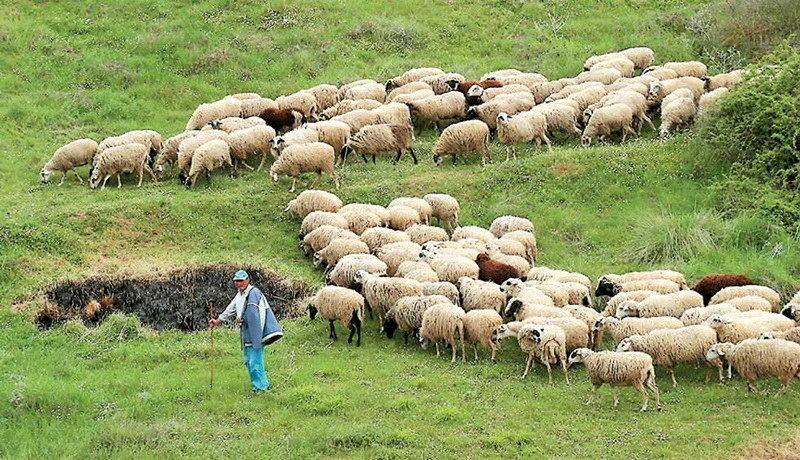 Ενημέρωση του νέου Υπουργού Αγροτικής Ανάπτυξης από τους Κτηνοτροφικούς Συλλόγους ΑΜ-Θ