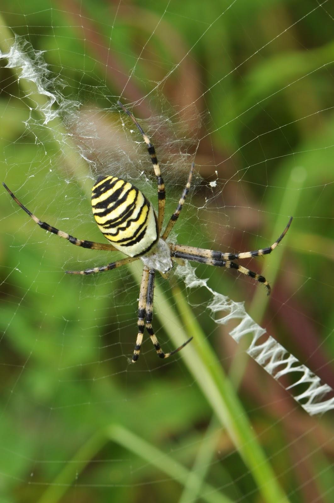 Ste marketingová líška alebo pavúk?