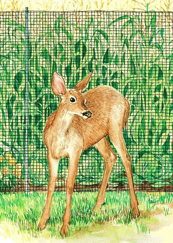 The Garden Oracle Deer Amp Rabbit Sprays Repellents