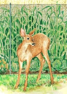 Animal Herbivore Pests can be one of the Most Destructive and Hard to Eliminate Problems for the Gardener, Farmer and Homeowner.  Deer, Elk, Rabbits, Wild Boar and Javelina Browse and Chew Down the Best New Growth and Most Glorious Flowers; and Can Decimate your Vegetable Garden and Edible Plantings Overnight!  Following are Natural and Pet-Friendly Deer, Elk & Rabbit Sprays, Repellents, Controls and Deterrents; along with Fencing, Netting and Screening to Keep the Hungry Critters Out (Including Elk, Boar and Javelina) and Away from Your Prized Flowers, Landscaping and Crops!  Happy Garden Shopping!