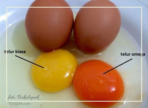 perbedaan telur biasa dan telur omega